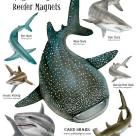 Sharks! Reefer Magnets